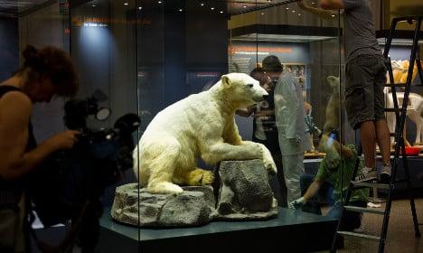 Knut goes on display in Berlin museum