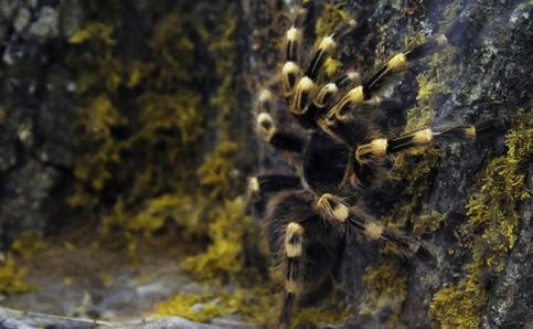 Swedish police nab Mexican spider