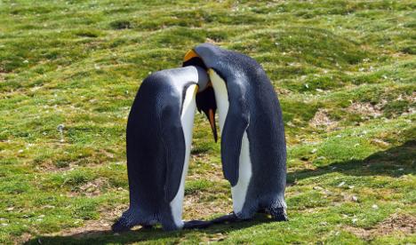 Norway heat: Penguins losing their cool