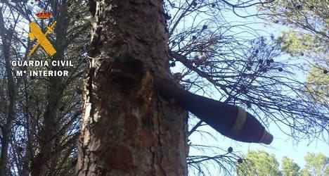 Civil war bomb stuck in pine tree for 75 years