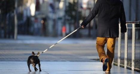 Barcelona dog walkers: get licence or face fines
