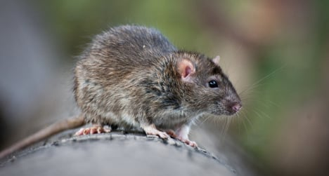 Rat cuts off power to 12,000 people in Madrid