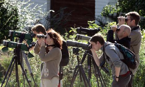 Swedish ornithologists keep webcam watch