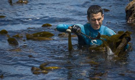 Crisis-hit Spaniards seek seaweed riches