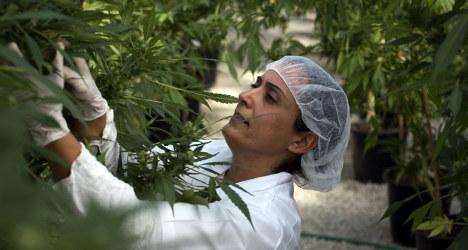 Catalonia set to legalize medical marijuana
