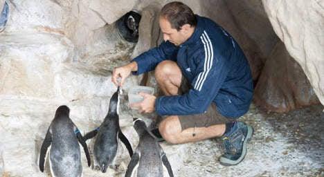 'Rare' penguin twins born in Genoa Aquarium