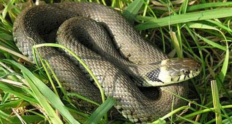 Snakes inspire kindergarten children