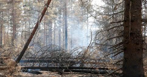 Forest still not safe after Swedish fire