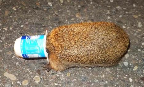 Police free hedgehog, natural order restored