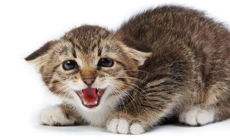 Miracle cat survives 20 gunshots in Norway