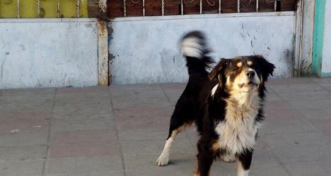 Tired man kills neighbour over barking dog