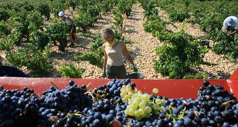 France drinks to bumper 2014 wine harvest