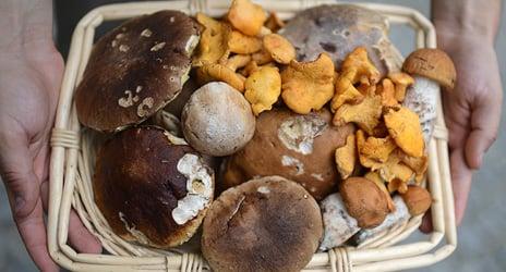 Holidays financed with black market mushrooms