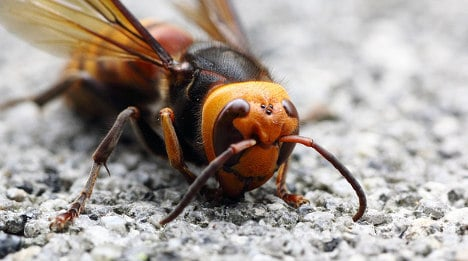 France tries to take sting out of Asian hornets