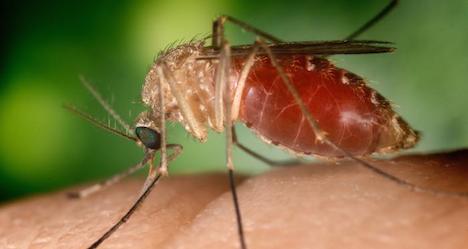 West-Nile virus now confirmed in Austria