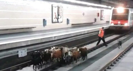 VIDEO: Goats invade Spanish train station