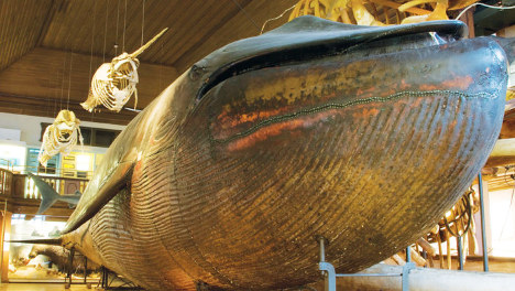 Museum celebrates polls with whale wordplay