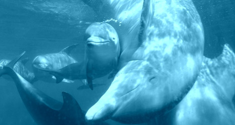 Madrid zoo shows off its cute baby dolphin