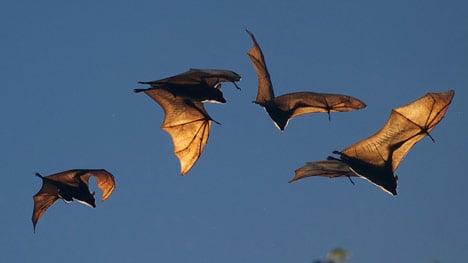 Danish woman's house overrun by bats