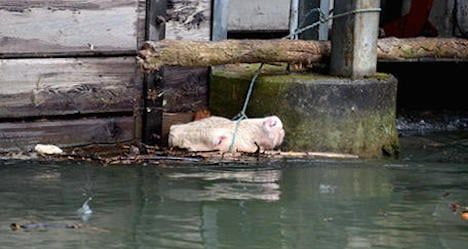 Runaway cow rescued from river in Freiland