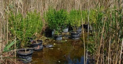 'Floating' cannabis found on Lake Neusiedl