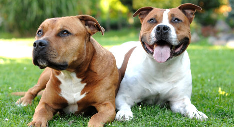 French mayor bars dogs called 'Itler' and 'Iva'