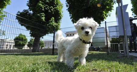 Five dogs poisoned in Salzburg