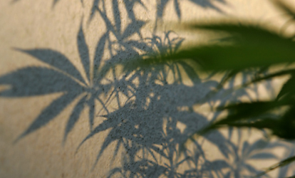 Cannabis: A burning issue for Austria's Neos