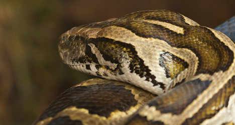 Snake smugglers caught by Swiss border guards