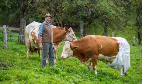 Bavarian farmer diapers cow over EU rules plan