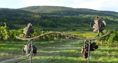 Austrian sparkling wines 'surpass Champagne'