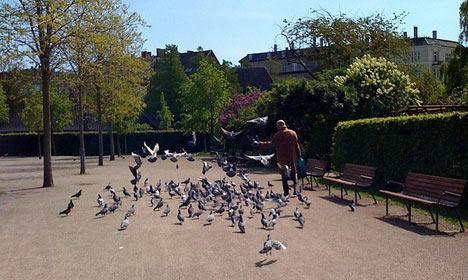 Copenhagen Police nab 'serial flasher'