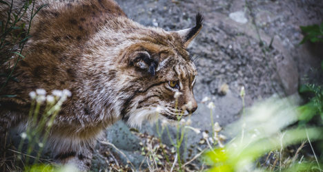 Spain 'Europe's worst' for endangered species