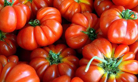 'Exploited' migrants behind Danish tomatoes