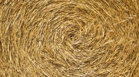 Italian artist sets out to find needle in haystack