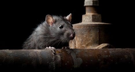 Rats paralyze Italian justice system