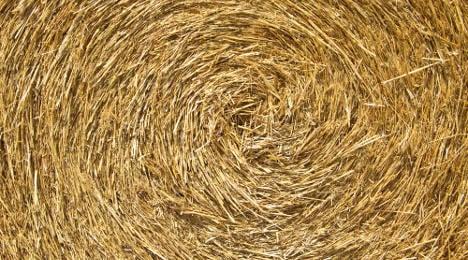 Artist to look for needle in haystack in Paris show