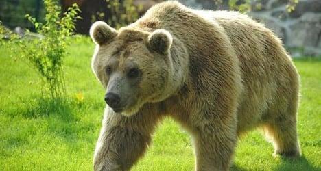 Bear escape raises alarm at zoo near Lausanne