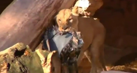 Policeman mauled by lions at Barcelona zoo