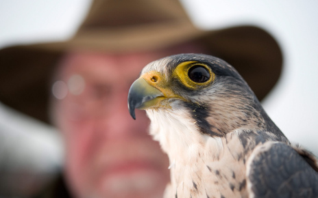 Falcons to go jet set with Lufthansa