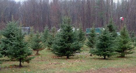 UK-bound migrants hide among Christmas trees