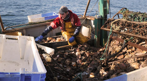 French scallops cleaned in China then sent back