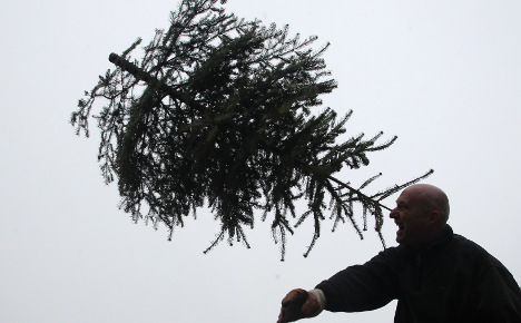 Over half of Christmas trees carry pesticides