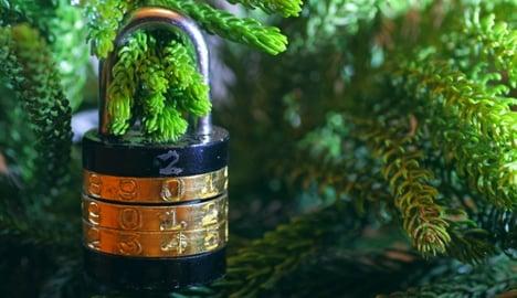 Naples gets anti-theft Christmas trees