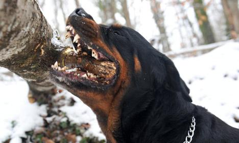 Brutal deer attack near Copenhagen was a dog