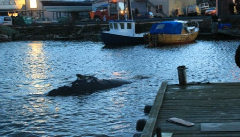 Whale escapes Sweden after five-hour ordeal