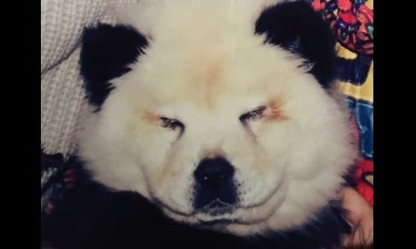 Circus tricked kids with dogs painted as pandas
