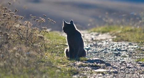 Cat returns after 1,200km trek across France