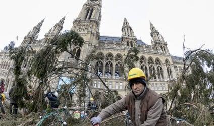 Vienna Christmas tree given new life