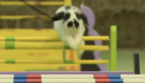 Swedish bunnies tipped for Grand National win